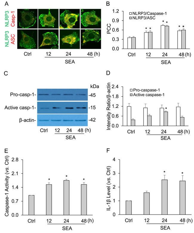 SEA induced the formation and activation of NLRP3 inflammasome in HSCs at different time points.