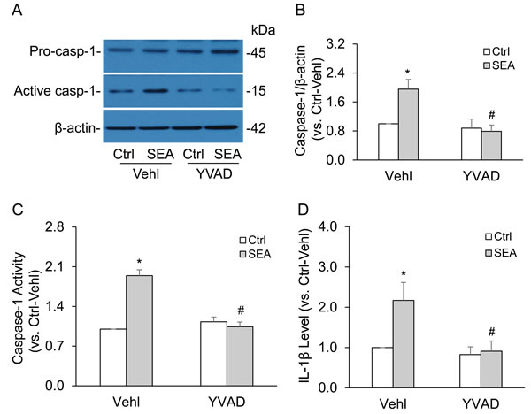 Caspase-1 inhibitor YVAD abolished SEA-induced caspase-1 activation and IL-1β production in HSCs.