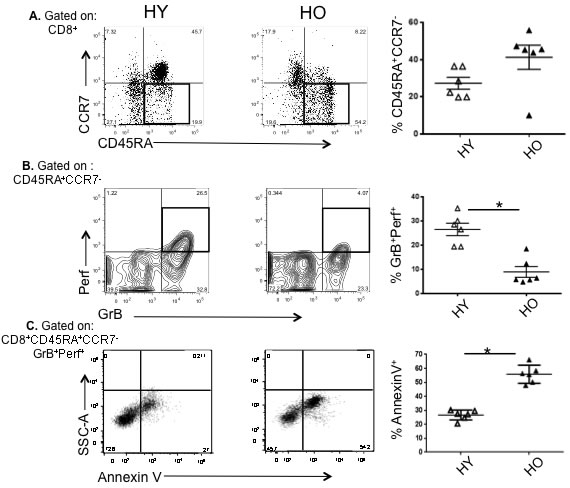 High apoptotic tendency and decline in proliferative capacity in effector memory CD8