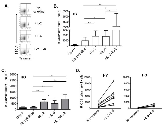 IL-2 and IL-6 induced proliferation of influenza-specific CD8