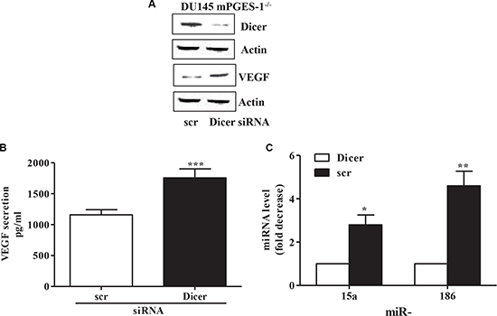 miRNA and VEGF expression/production in Dicer silenced mPGES-1-/- cells.