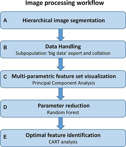 Image processing workflow.
