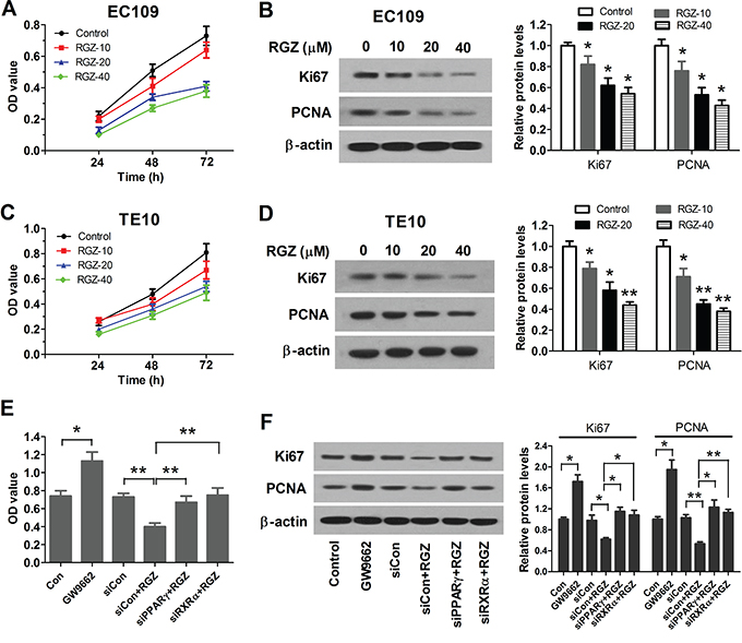 PPARγ activation suppresses proliferation of esophageal cancer cells.