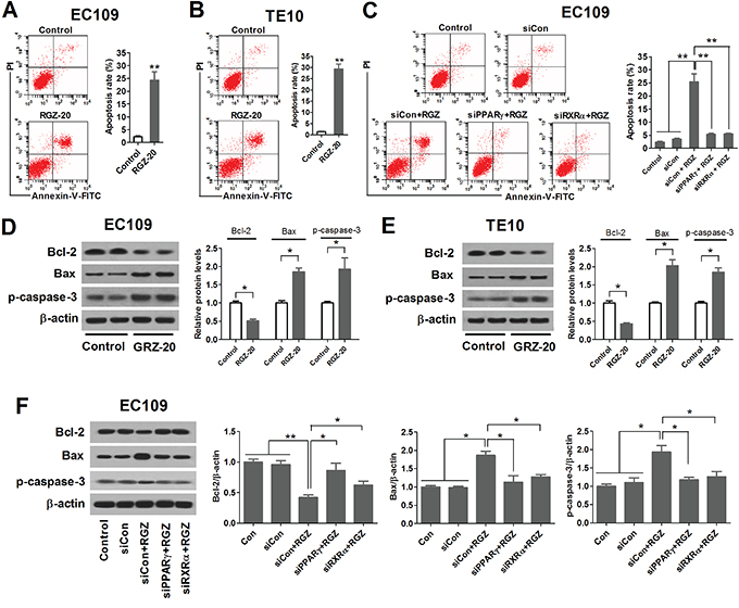 PPARγ activation induces apoptosis of esophageal cancer cells.