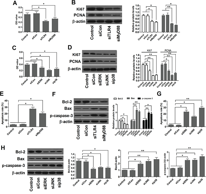 Inactivation of TLR4 and MAPK pathways suppresses proliferation and induces apoptosis of esophageal cancer cells.