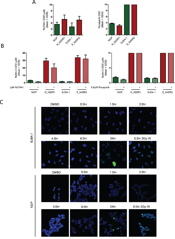 Inhibition of DNA-PK and PARP-1 do not influence the sensitivity of either the parental or their resistant counterparts to Nutlin-3.