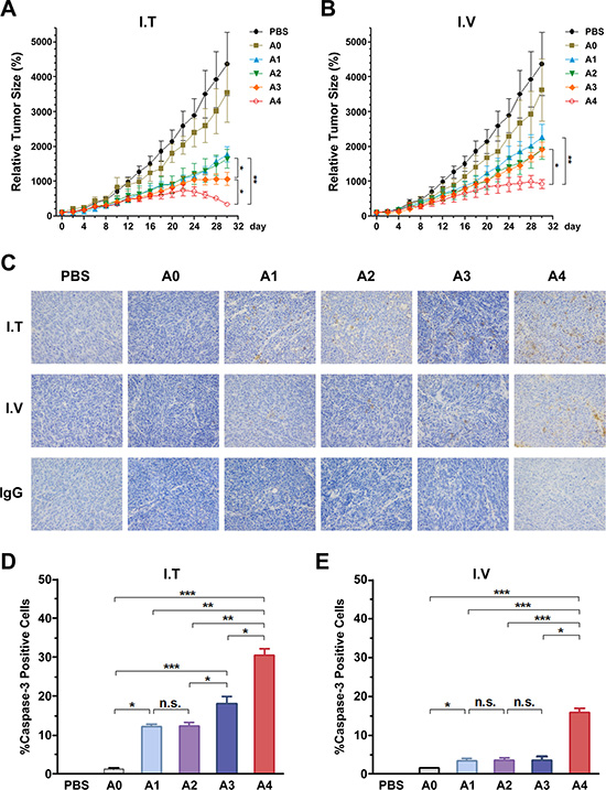 Anti-tumoral activity of Ads using different injection routes in vivo, and the detection of caspase-3 activation in tumor tissues treated with recombinant Ads by two routes in ZR-75-30 tumor-bearing mice.