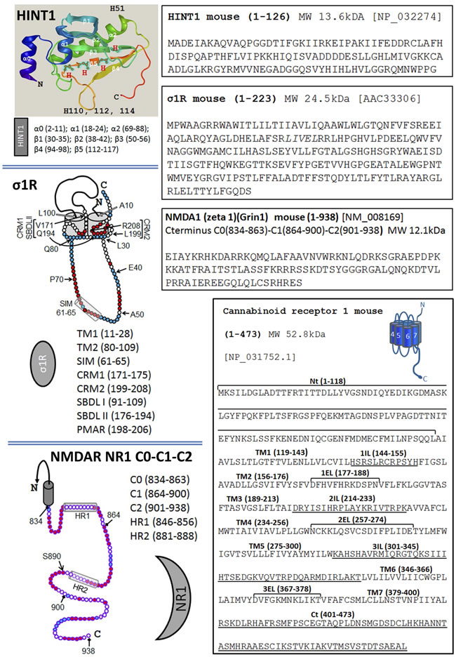 The sequence of HINT1, σ1R, the C terminal of the NMDAR NR1 subunit and the CB1 receptor.