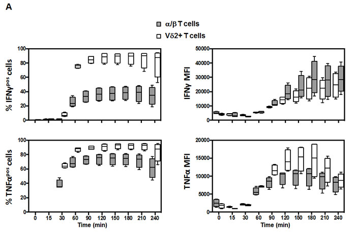 Kinetic response of Vδ2 and associated subsets.