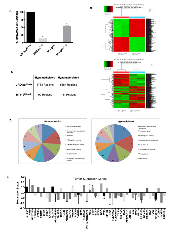 Epigenetic changes in the MMP2 gene promoter and globally in human bladder cells expressing ANG.