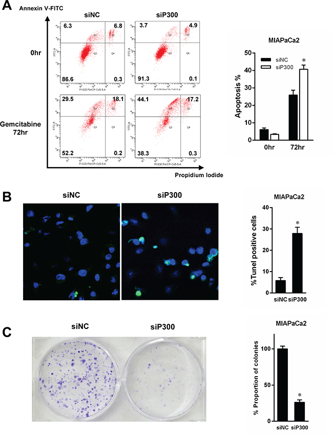 Gemcitabine-induced apoptosis was evaluated by flow cytometry (A) and TUNEL staining (B).