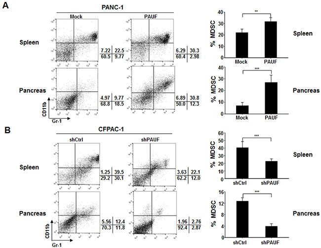 PAUF triggers enhanced MDSC accumulation in pancreatic tumor-bearing mice.