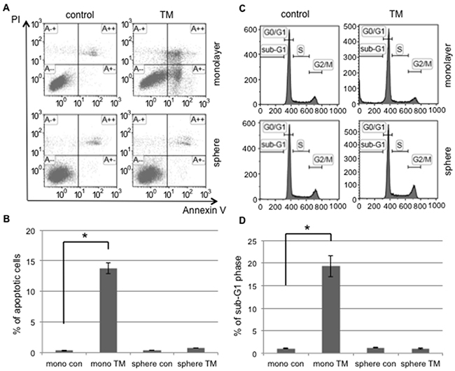 Tunicamycin-induced apoptosis occurred in monolayer cells, but not in sphere-forming cells.