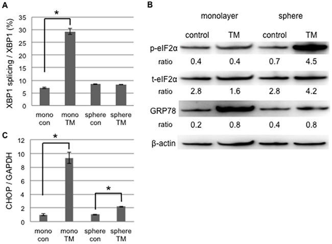 UPR to tunicamycin-induced ER stress differed between cancer stem-like and cancer cells.