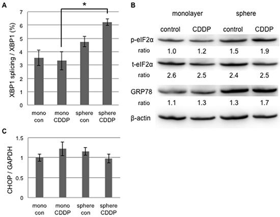 UPR to cisplatin-induced ER stress differed between cancer stem-like and cancer cells.