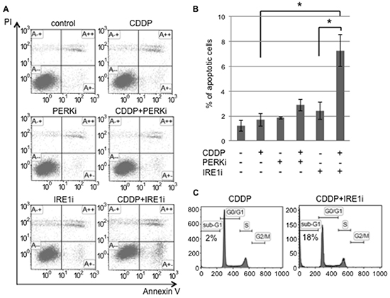 The IRE1α inhibitor induced cisplatin-mediated apoptosis in cancer stem-like cells.