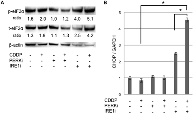UPR production was increased in cancer stem-like cells treated with the IRE1α inhibitor combined with cisplatin.