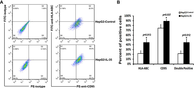 Flow cytometry analysis of the expression of HLA-ABC and CD95 in HepG2 cells.