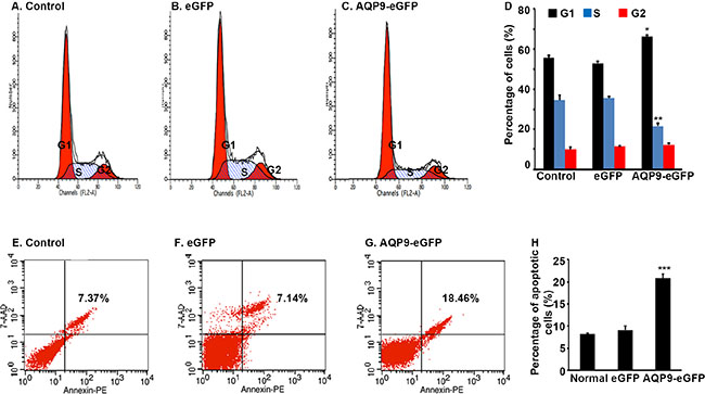 Overexpression of AQP9 in liver cancer cells induces cell cycle arrest and apoptosis.