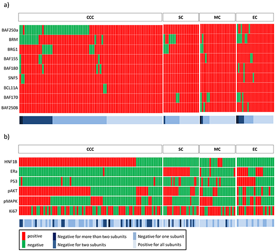 Expression heatmaps.