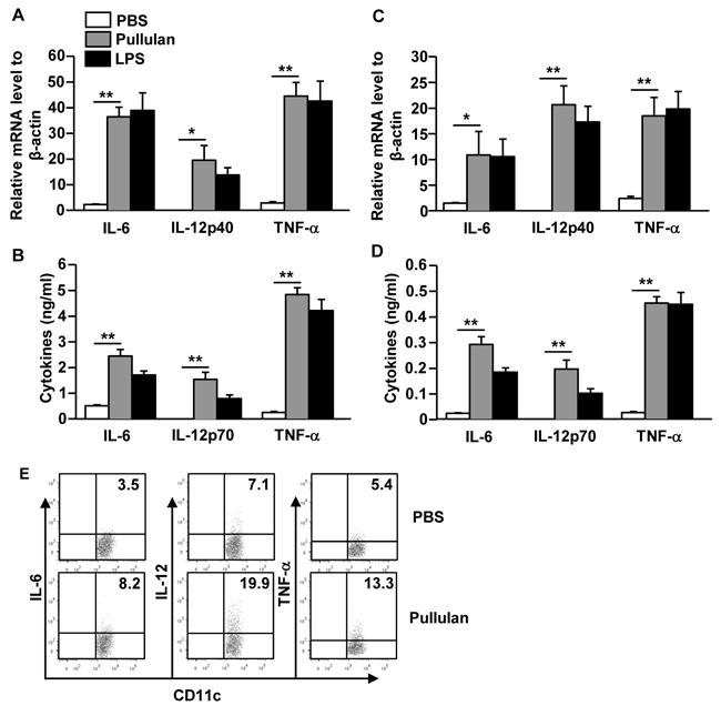 Pullulan induces pro-inflammatory cytokine production on DCs.