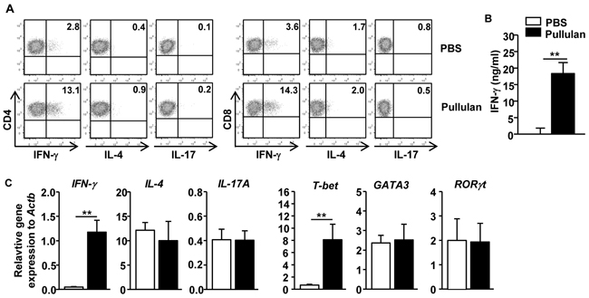 Pullulan promotes IFN-γ-producing CD4 and CD8 T cells in vivo.