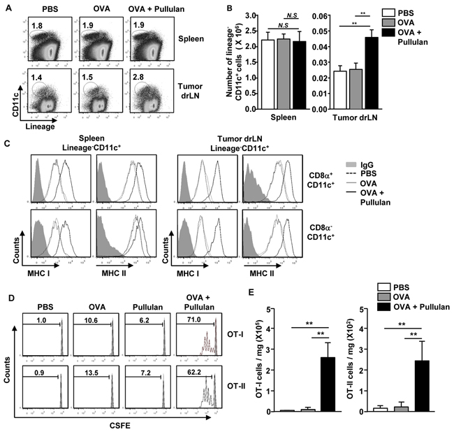In vivo administration of pullulan induces maturation of DCs and antigen specific T cell responses in tumor-bearing mice.