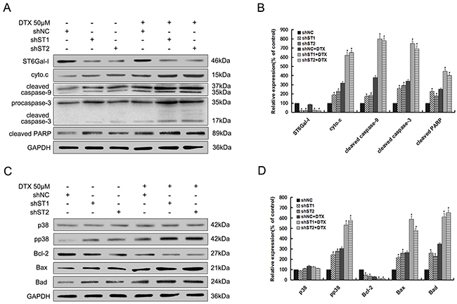 Silencing of ST6Gal-I in MHCC97-H cells enhances docetaxel-induced apoptosis through potentiation of p38 MAPK mediated mitochondrial-dependent pathway.