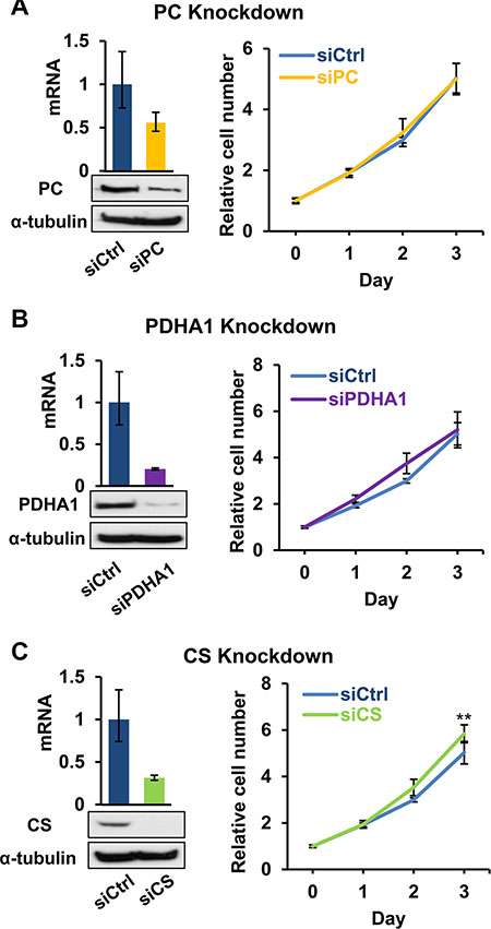 Effects of disruption of pyruvate-based biosynthesis on 143B206 cell proliferation.