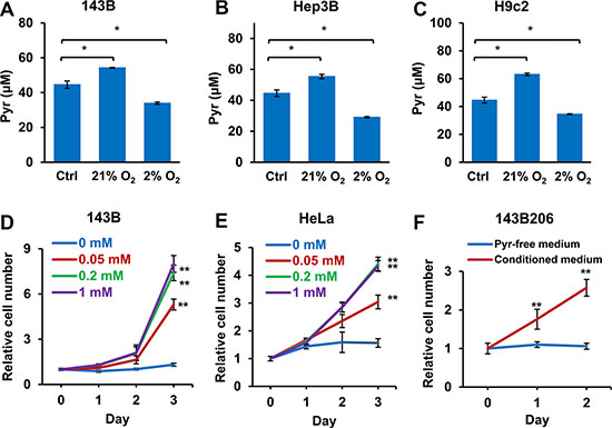 Well-oxygenated cells release pyruvate and hypoxic cells consume pyruvate in the media.