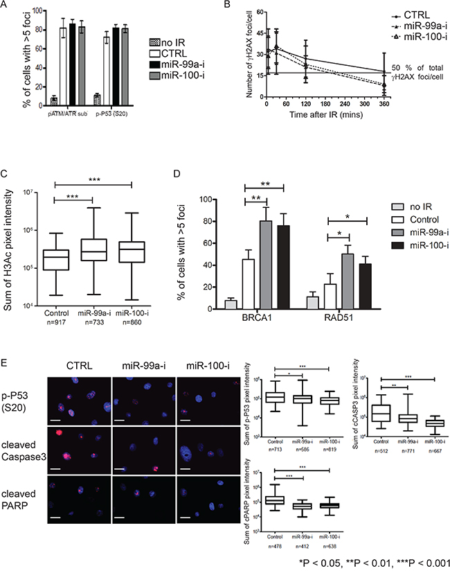 Suppression of miR-99a and 100 promotes DNA repair enhance recruitment of DNA repair proteins.