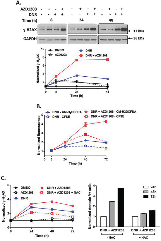Pim kinase inhibitor enhances induction of DNA damage and ROS generation by topoisomerase 2 inhibitors in cells with FLT3-ITD.