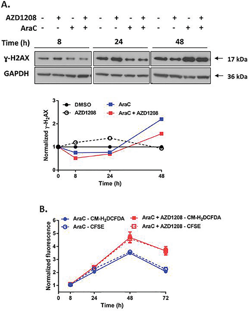 Pim kinase inhibitor does not enhance induction of DNA damage and ROS generation by AraC in cells with FLT3-ITD.