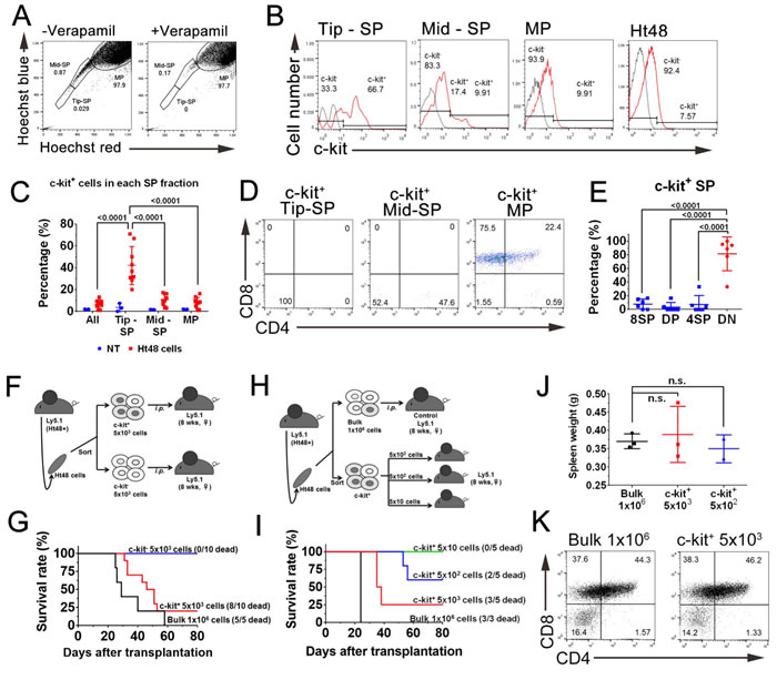 Evaluation of the dye efflux function in ATLSCs by a subpopulation analysis of Ht48 cells.