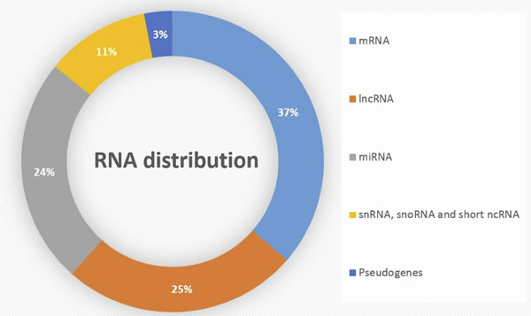 Distribution of RNA subtypes in human genome.
