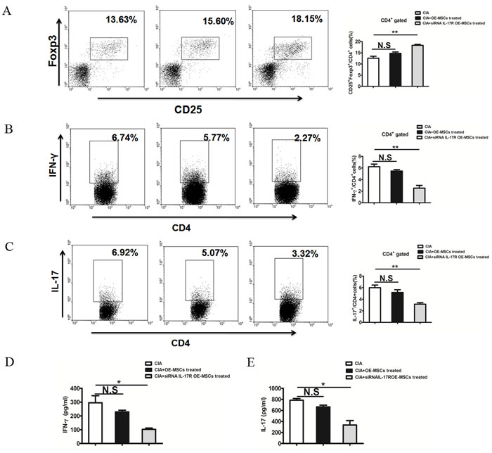 IL-17R knockdown OE-MSCs enhances Treg cells and reduces Th1 and Th17 cell responses in collagen-induced arthritis.