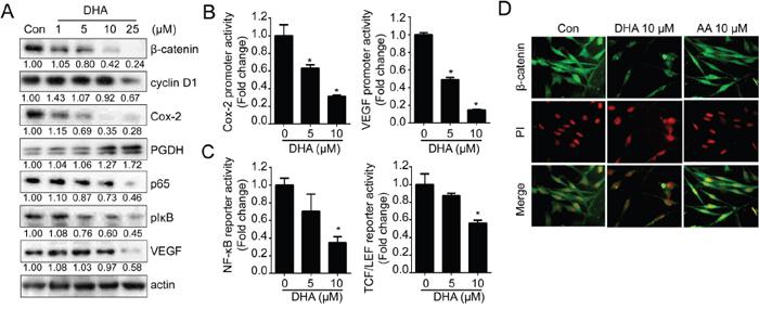 DHA suppresses various oncogenic signaling pathways.