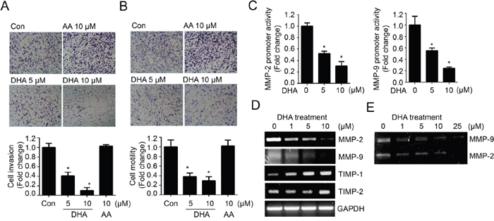 DHA treatment reduces in vitro cell invasion and motility by modulating MMP expression and activity.