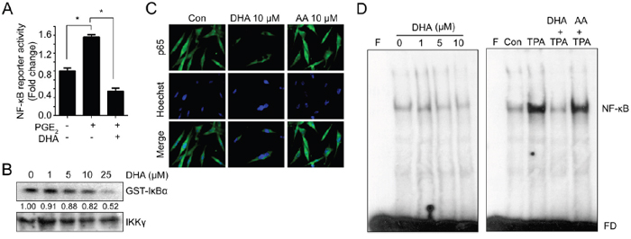 DHA blocks NF-κB signaling which can bind to MMP promoter.