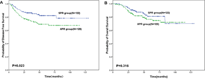 Survival of patients with lower locally advanced rectal cancer treated with preoperative chemoradiotherapy followed by sphincter preserving resection (SPR) or abdominoperineal resection (APR).