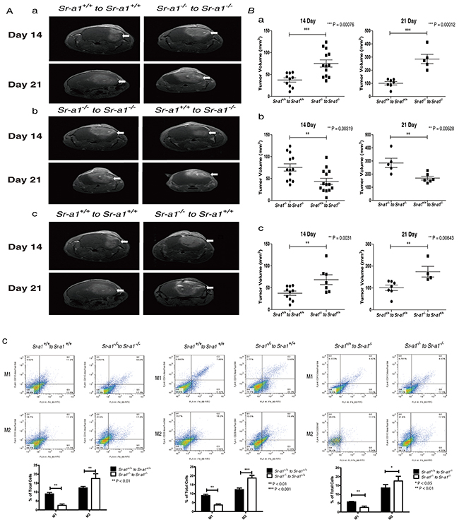 SR-A1 in BMDMs inhibits tumor growth and angiogenesis in the murine brain.