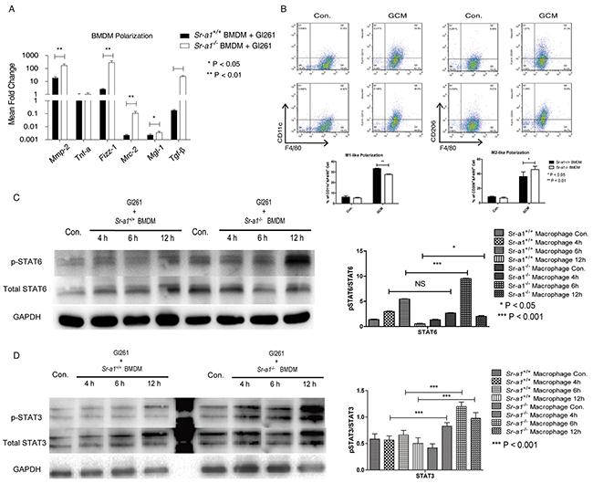 Effects of SR-A1 on BMDM polarization in vitro.