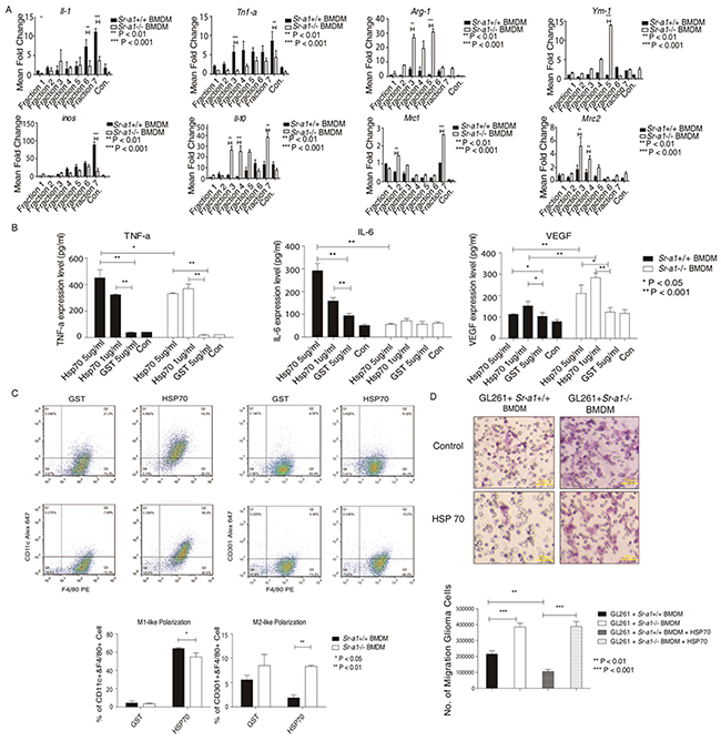 HSP70 inhibits glioma progression by activating SR-A1 in BMDMs.