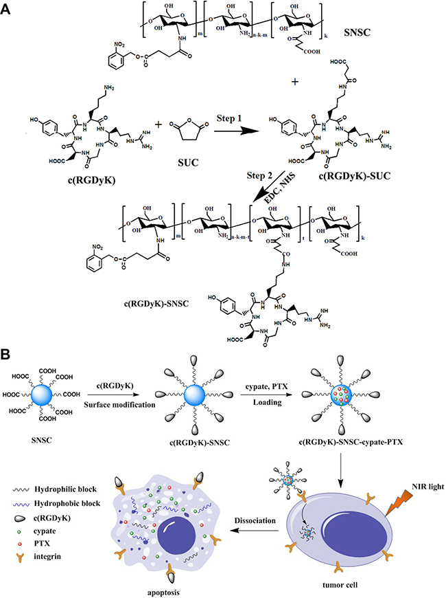 Synthetic scheme and structures of targeted NIR light sensitive nanoplatform c(RGDyK)-SNSC and αvβ3-mediated binding of tumor cells.