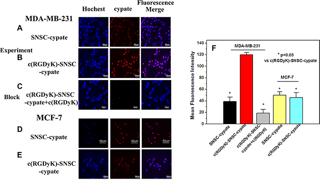 The laser confocal fluorescence microscopy images of αvβ3-positive MDA-MB-231 and αvβ3-negative MCF-7 cells incubated with SNSC-cypate.