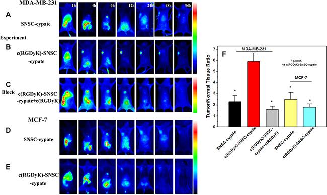 In vivo targeting behavior of c(RGDyK)-SNSC micelles in tumor bearing animals for 1 to 96 hours.