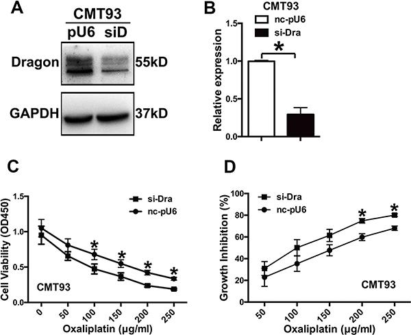 Inhibition of Dragon expression sensitizes CMT93 cells to oxaliplatin.