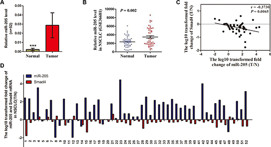 Expression of miR-205 is upregulated in NSCLC tissues and inversely correlated with SMAD4 expression.