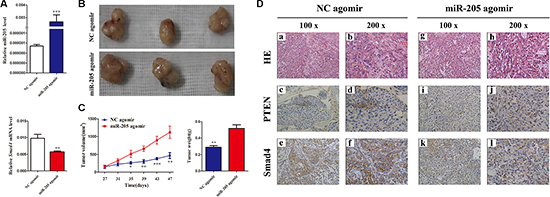 Overexpressing SMAD4 in NSCLC cells promotes tumor growth in vivo.