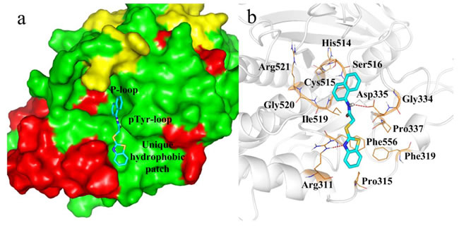 Docking of compound 4a with PTP-MEG2.